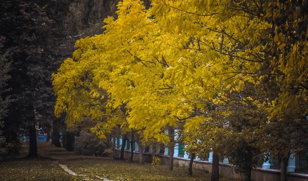 1154051 603x354 - Ботанический сад Витебского государственного университета