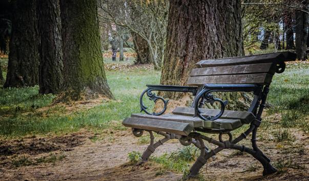 1268420 603x354 - Ботанический сад Витебского государственного университета